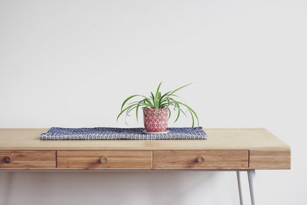 spider plant home office