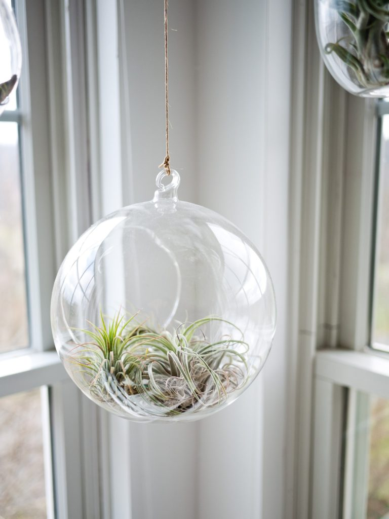air plant office